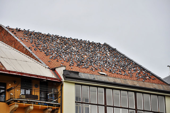 A2B Pest Control are able to install spikes to deter birds from roofs in Charlton.