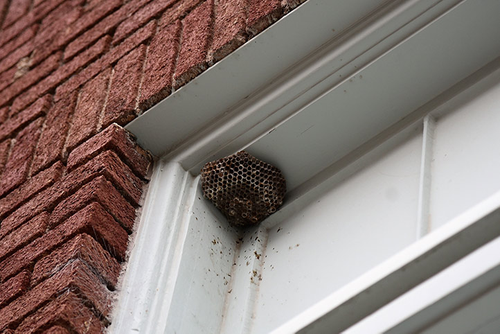 We provide a wasp nest removal service for domestic and commercial properties in Charlton.